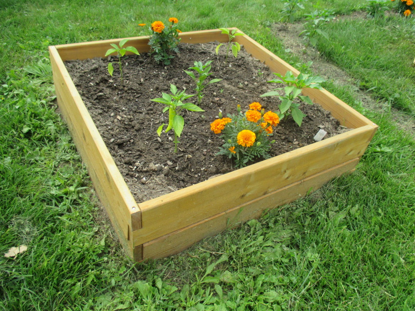 Raised garden bed kit 339x339 for Raised bed garden kits